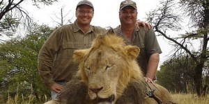 Not Cecil. This is another Lion killed by the dentist. How many poachers are we ignoring by focusing on the dentist?